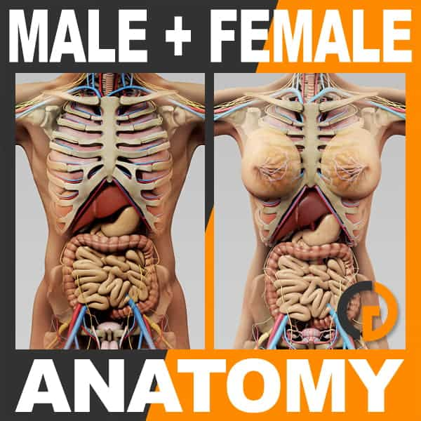 6123 Human Male and Female Anatomy Body Skeleton and Internal Organs