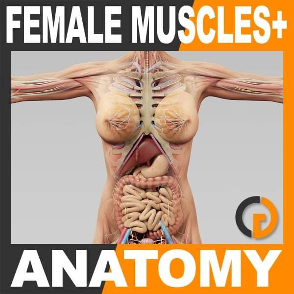 FemaleMuscAnat th001