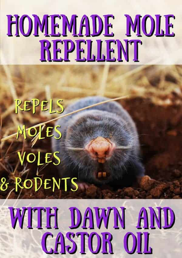get rid of moles with dawn soap