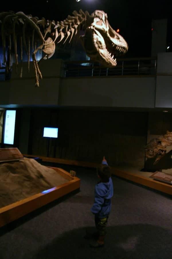drumheller museum, drumheller alberta, drumheller, dinosaur museum, royal tyrrell museum, trex, skeleton, drumheller with toddler, drumheller with a toddler, drumheller with kids