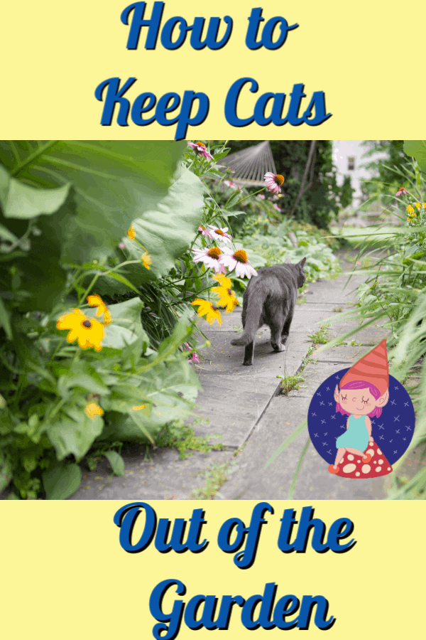 cat walking along garden path