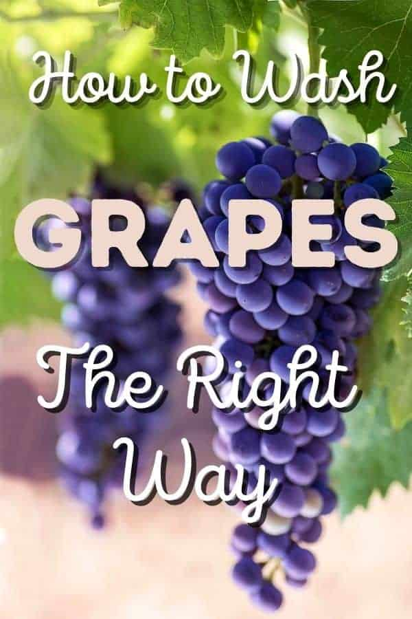 """purple grapes hanging from a vine with text in front """"how to wash grapes the right way"""""""