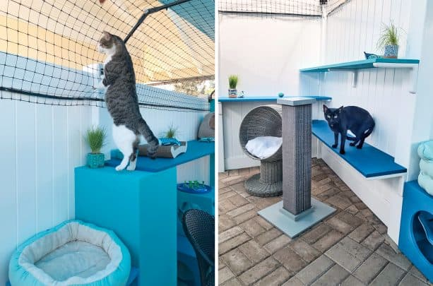 the outdoor enclosure has lots of shelves for the cats