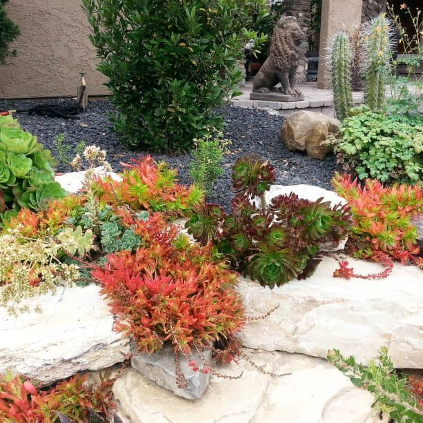 black lava rock floor with colorful succulents and boulders as the border