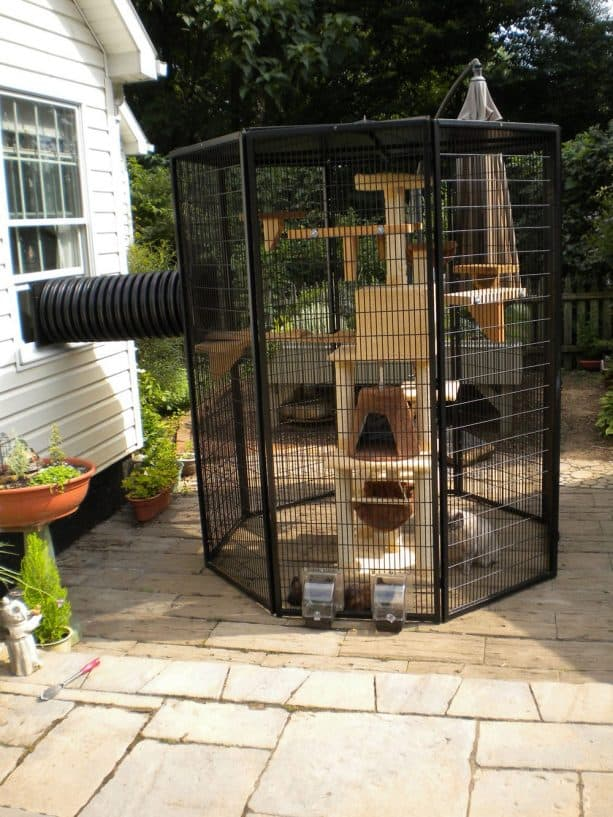 black aluminum frame hexagonal cat enclosure connected to house with cat tree inside it