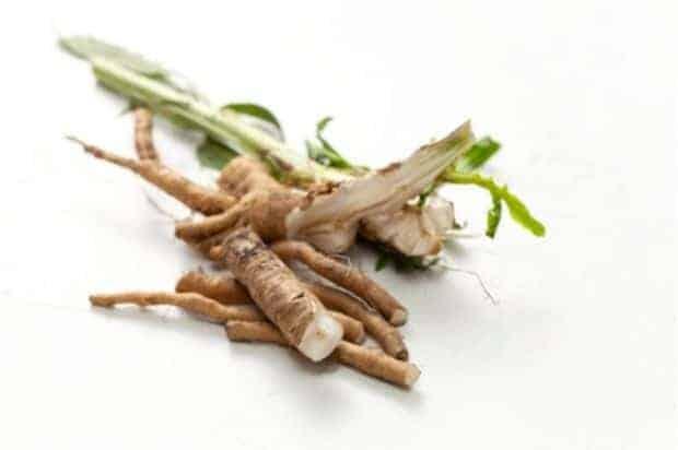 Raw chicory root before roasting