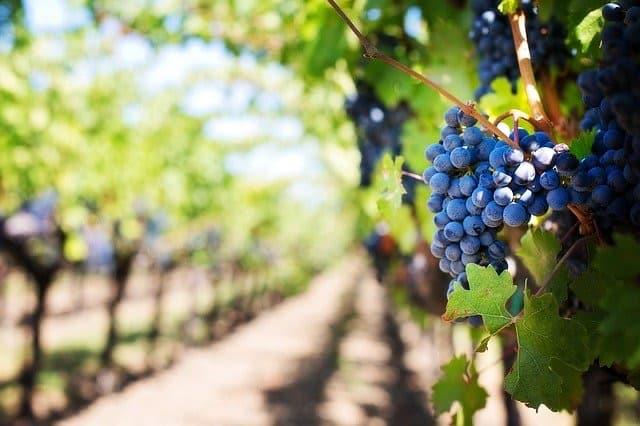 Can You Blend Grapes - Bill Lentis Media