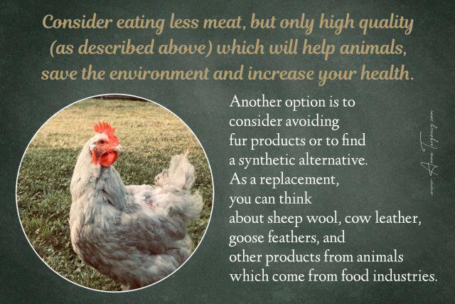 How to Stop Animal Cruelty