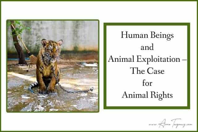 how to stop animal exploitation