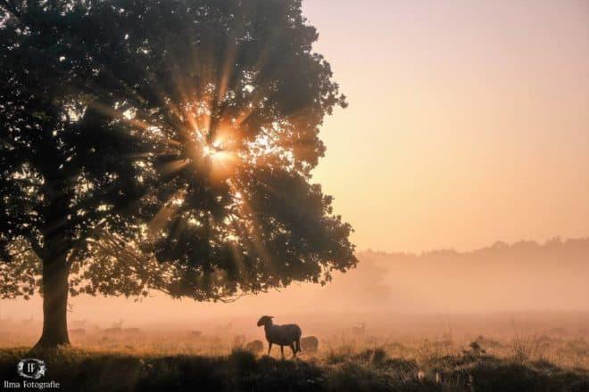 Doldersummerveld- Fotograaf Ilma Meijer