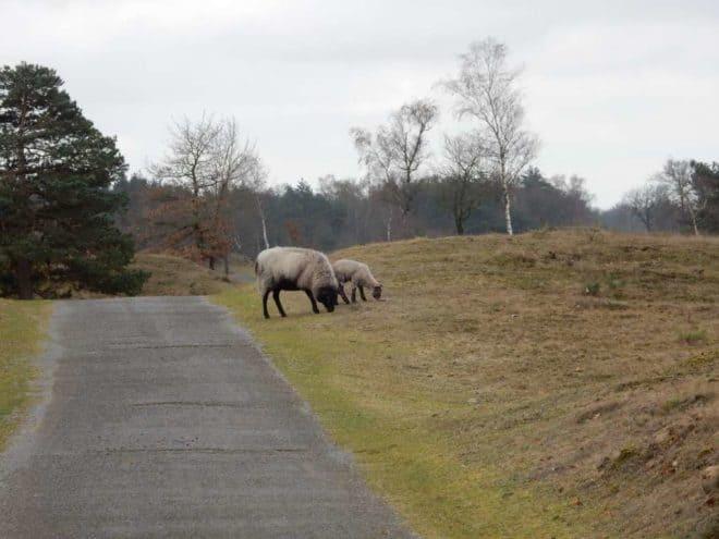 Fotograaf Betsy Op De Dijk Schotema