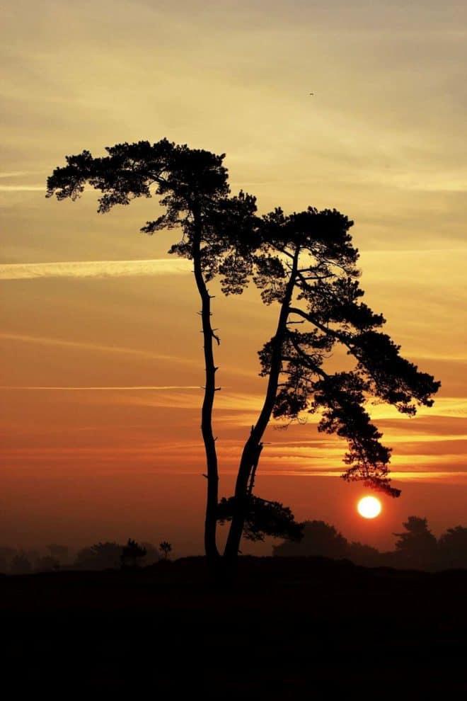 Kale Duinen boom met ondergaande zon - Fotograaf Hielke Roelevink