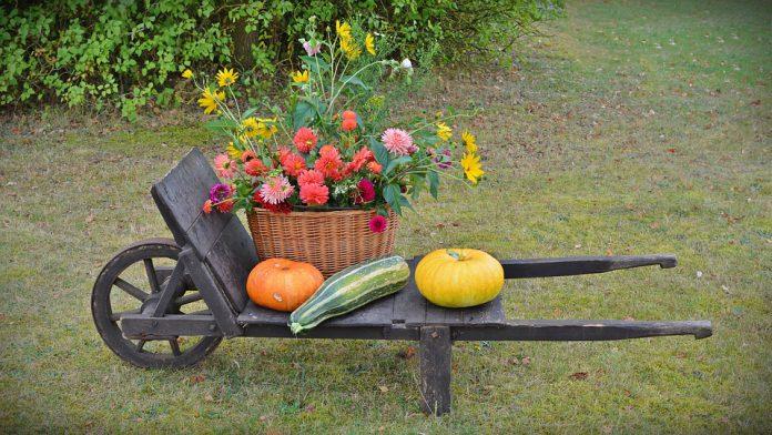 Indoor Vegetable Garden - Bill Lentis Media