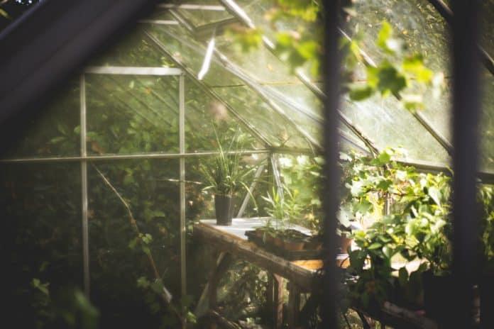 Shade Vegetable Garden - Bill Lentis Media