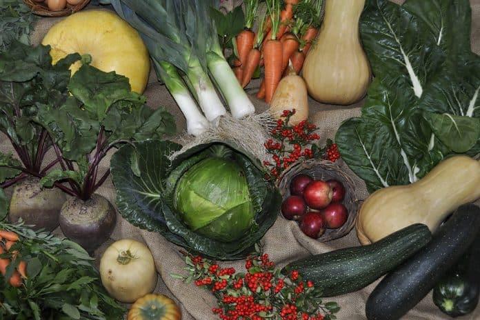 Vegetable Garden Layout - Bill Lentis Media