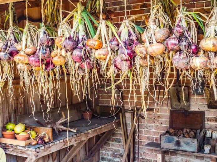 Hanging Vegetable Garden - Bill Lentis Media