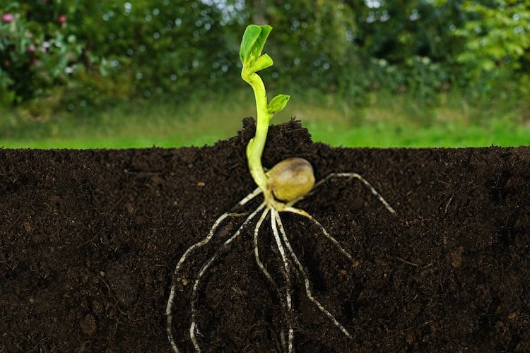How to Make Plant Roots Grow Faster