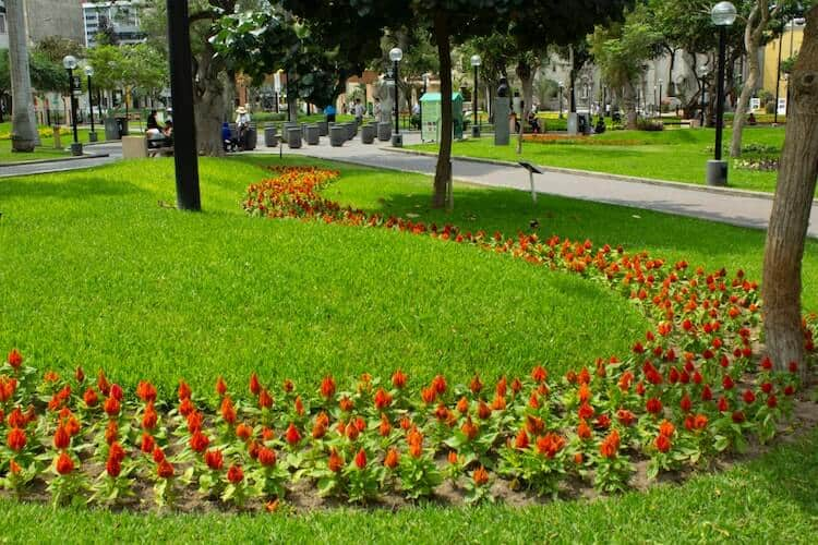 Do You Need To Remove Grass Before Mulching