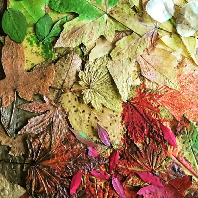 ombre leaves dried leaf art
