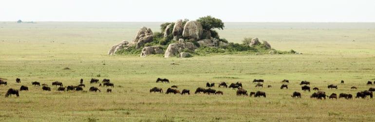 Dunia-Camp-migration-moru-kopjes-serengeti-main