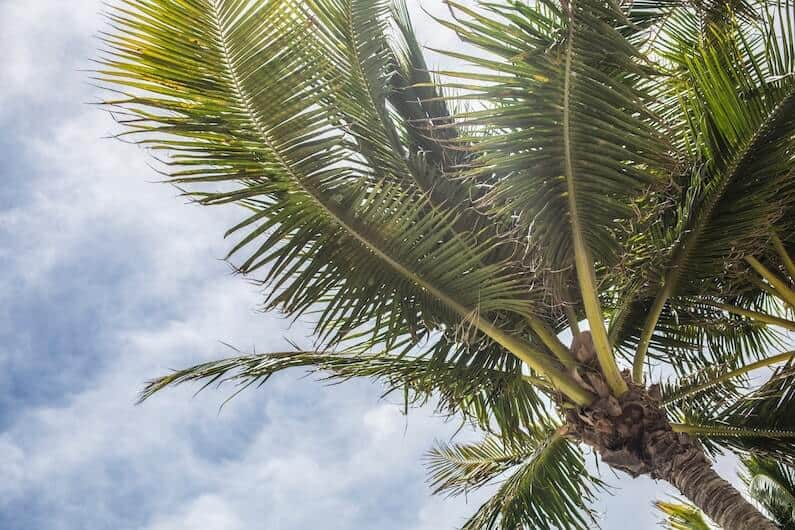 palm trees in florida signifying freedom after addiction