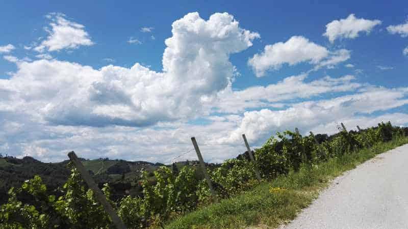 Weingarten an der Straße in Slowenien