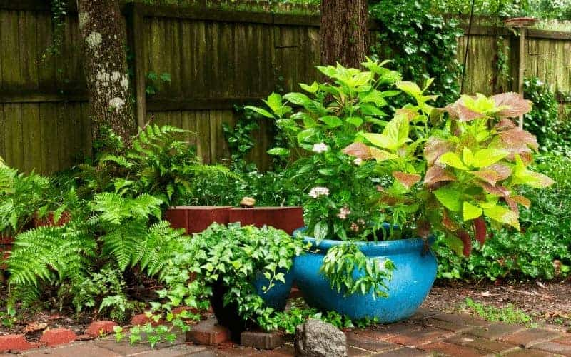 Plants That Grow Well Together In Pots