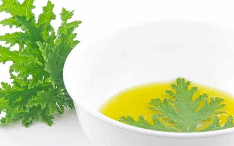 What Bugs Does Citronella Keep Away