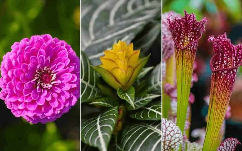 Flowers That Start With Z