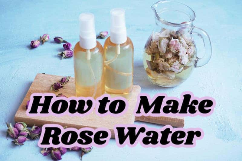 DIY rose water recipe.