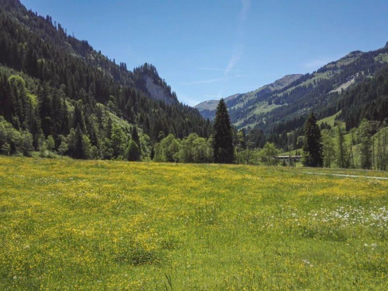 bluehende Bergwiesen