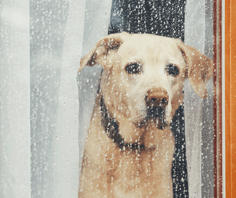 serotonin syndrome in dogs can be lethal
