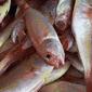 第29類 食用魚介類