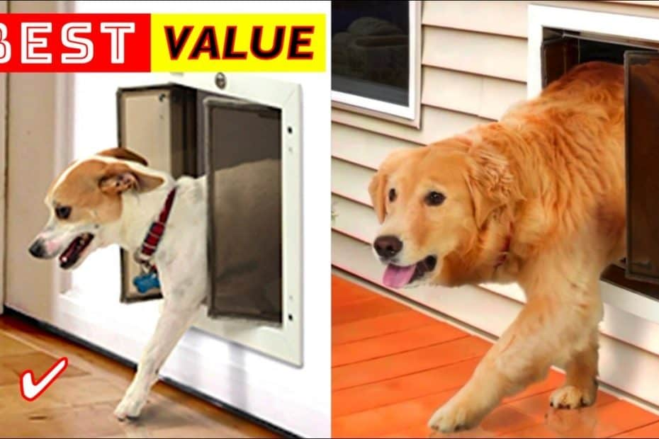 Best Pet Doors for Dogs and Cats