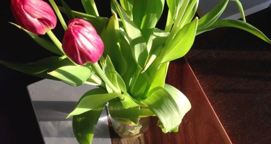 tulips on concrete and guanacaste end table