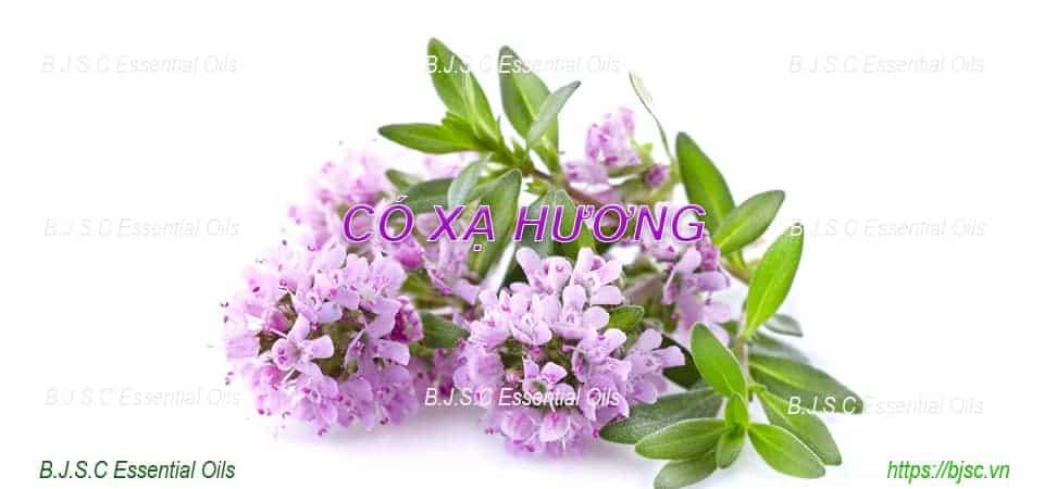 Tinh-dau-co-xa-huong-nguyen-chat-nhap-khau