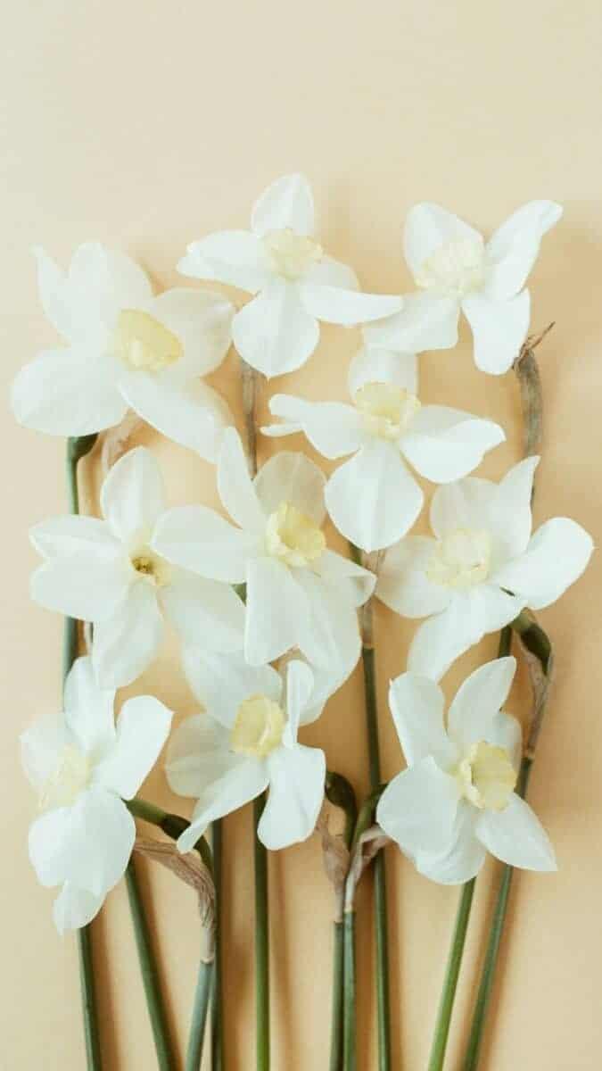 white lilacs wallpaper aesthetic, pink flower wallpaper iPhone