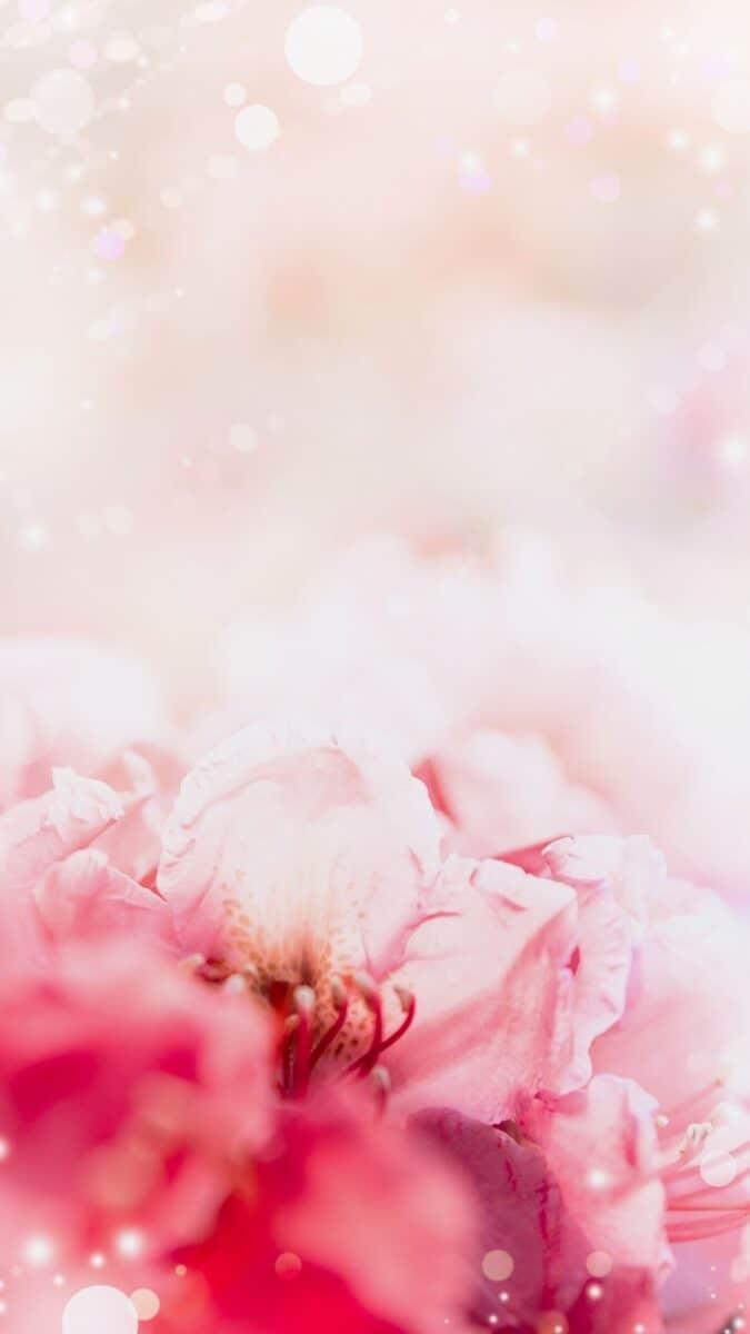 pretty in pink flowers wallpaper aesthetic, pink flower wallpaper iPhone
