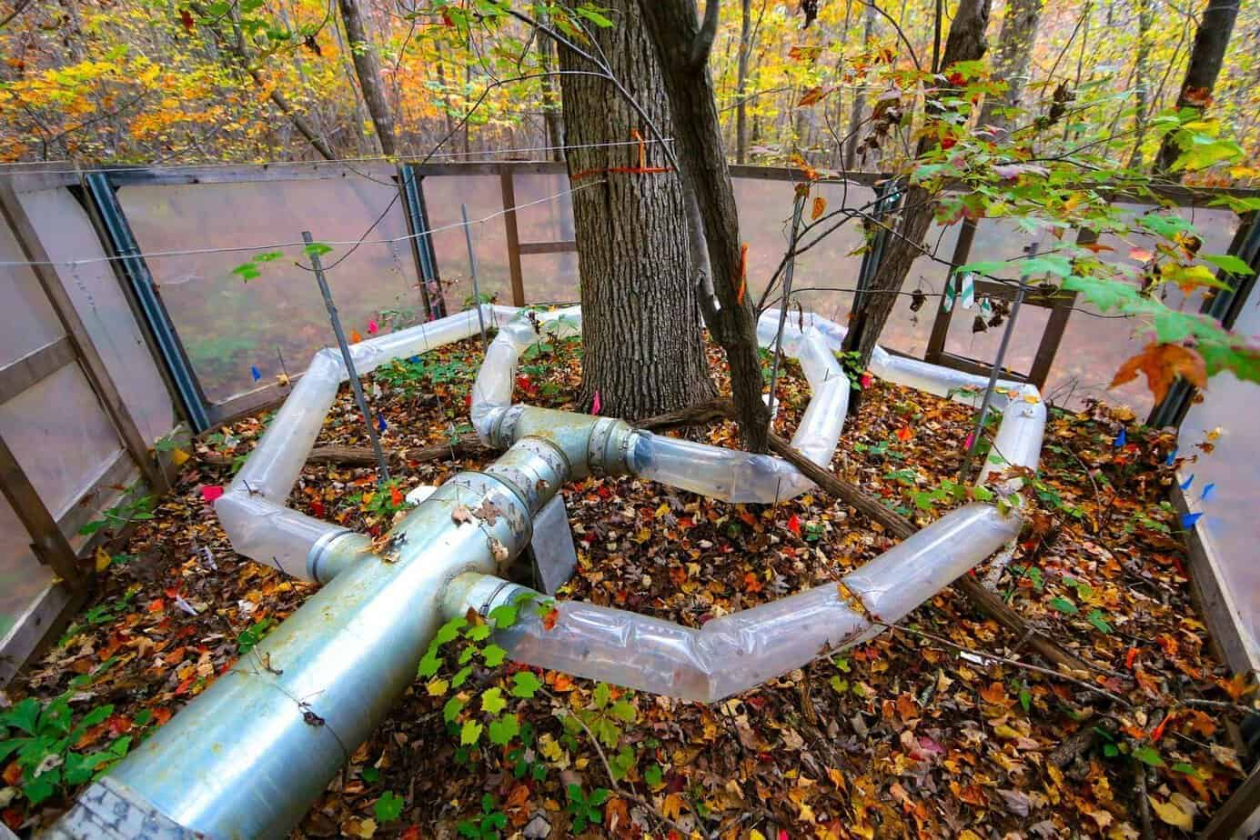 Warming chamber at Duke Forest where we heated forest plots to simulate future climate warming over five years. (photo: James Waters)