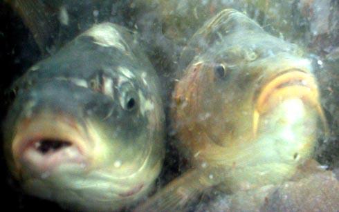أحواض الأسماك – نظرة من الداخل