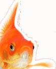 خمسة أسباب للامتناع عن تناول السمك