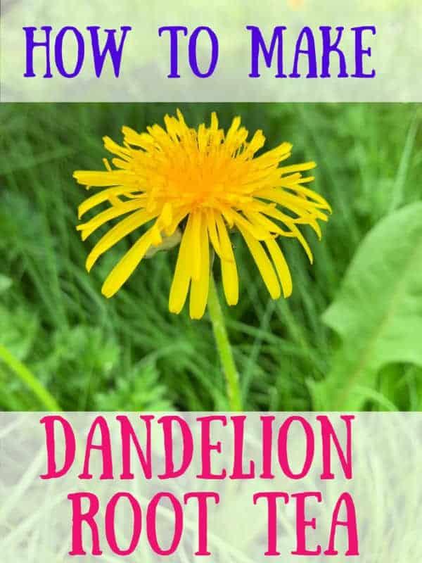 how to make dandelion tea