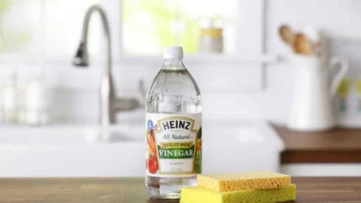 vinegar on counter