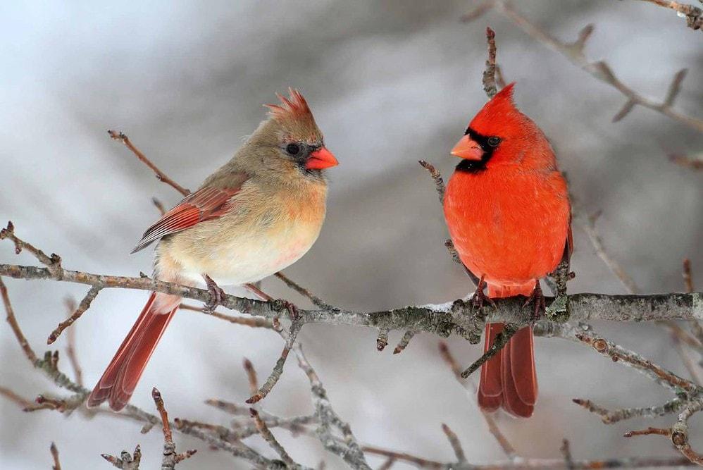 Bird Informer Hero Image