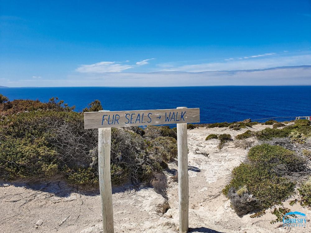 Fur-Seal-Walk-Coffin-Bay-Port-Lincoln Eyre Peninsula