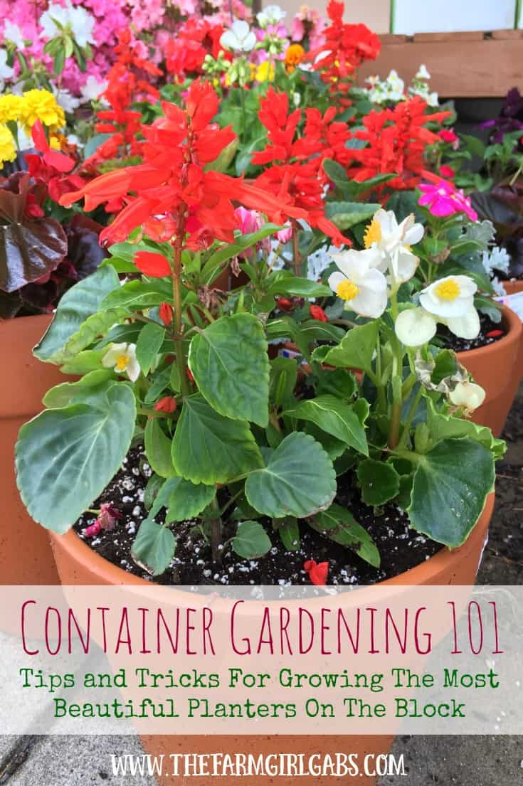 Container Gardening 101: Tips and Tricks For Growing The Most Beautiful Planters On The Block!