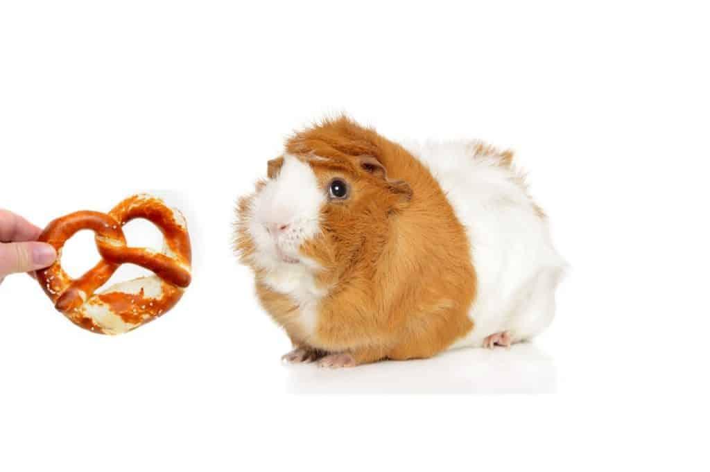 Can Guinea Pigs Eat Pretzels