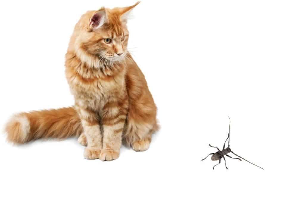 Do Cats Eat Bugs
