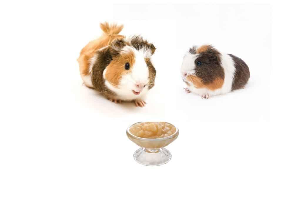 Can Guinea Pigs Eat Applesauce