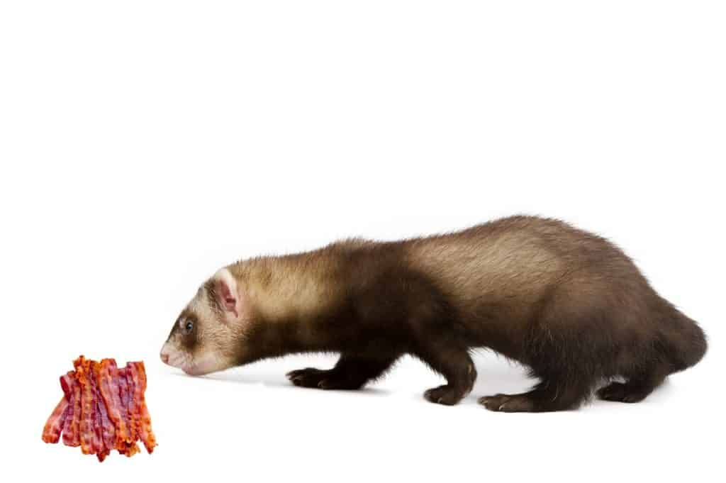 Can Ferrets Eat Bacon